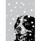 ff09401 | freshfish | Bernhardiner im Schnee - Postkarte A6