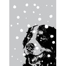 ff09401 | freshfish | St. Bernard In The Snow - postcard A6
