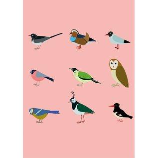 Druck A4  - Vögel
