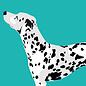 bf001   Postkarte - Dalmatiner