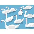 Postcard - Swans