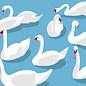 bf002 | best friends | Swans - postcard A6