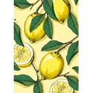 IL9085 | Klappkarte - Lemona