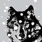 ff08709 | Postkarte -Wolf im Schnee Wolf im Schnee