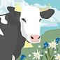 cc176 | Postkarte - Spring Cow