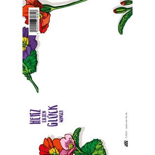IL0246 | illi | Primula Glückwunsch - Postkarte A6