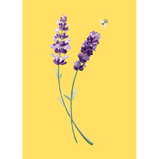 mi025 | m-illu | Lavender-  postcard A6