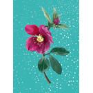 mix200 | m-illu | Christmas Rose blue - Postkarte A6