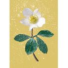 mix201 | m-illu | Christmas Rose yellow - Postkarte A6