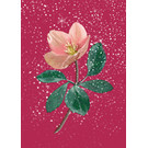 mix202 | m-illu | Christmas Rose bordeaux - postcard A6