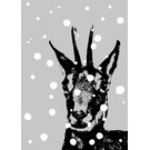 ff08507 | Postcard - Chamois In Snow