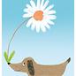 sg234   schönegrüsse   Dachshund with flower  - postcard A6