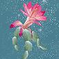 mix219 | m-illu | Christmas Cactus -  postcard A6