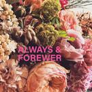 Libelle li005 | Libelle | Always & Forever  - postcard