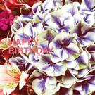 Libelle li016 | Libelle | Happy Birthday