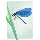 di023 | Daria Ivanovna | dragon-fly