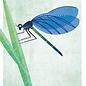 di023   Daria Ivanovna   Libelle - Postkarte A6