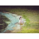 b049 | brocante | Flamingo - postcard A6