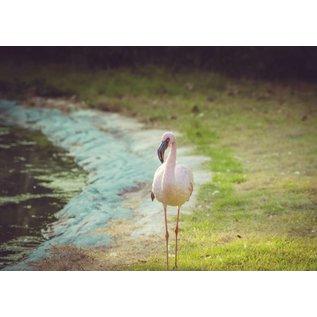 b049 | brocante | Flamingo - Postkarte A6