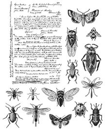 Stampers Anonimous Cling Stamps Entomology (CMS328)