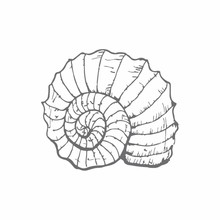 Couture Creations Fibonacci Shell Mini Clear Stamp (CO726160)