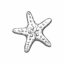 Couture Creations Starfish Mini Clear Stamp (CO726163)