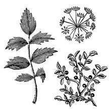 Stamperia Natural Rubber Stamp Herbarium (WTKCC150)