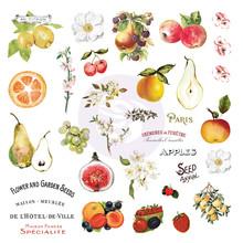 Prima Marketing Inc Fruit Paradise Ephemera with Stickers (638429)