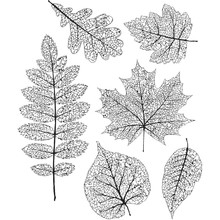 Stampers Anonimous Cling Stamps Pressed Foliage (CMS376)