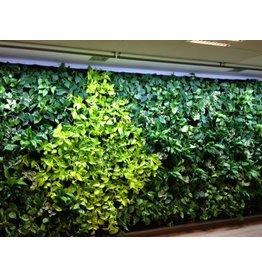 Parus LED wachsen helle grüne Wand 90cm 120 °