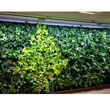 LED wachsen helle grüne Wand 60cm 120 °