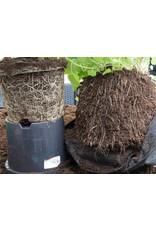 ROOTPOUCH Thin BLACK 1 ltr , 50st/bundel, 90gr/m2