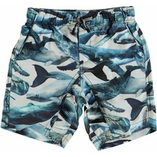 Molo swimming shorts Whales