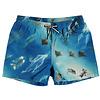 Molo swim shorts Above Ocean