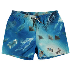Molo swim shorts Above Ocean