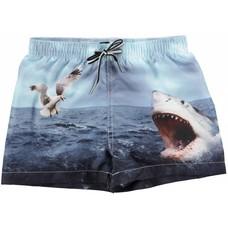 Molo shorts Shark Attack