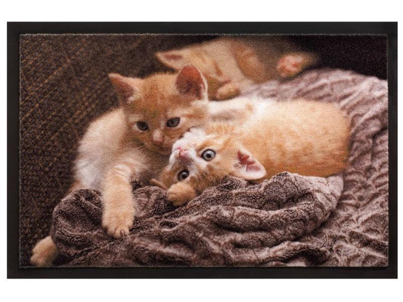 Schoonloopmat 40 x 60 cm -  Image Cats