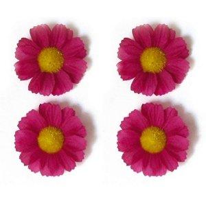 Basil Margrietjes Bloemen/Flower Roze