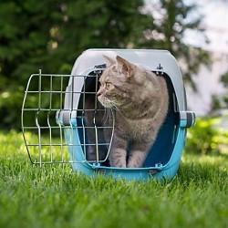 Transport Kat