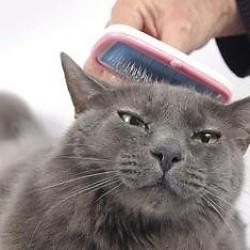 De beste kam of borstel voor je langharige kat