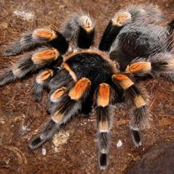 Spinnen Benodigdheden