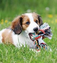 Hondenspeeltjes die niet stuk gaan