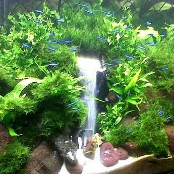 Aquarium Waterval