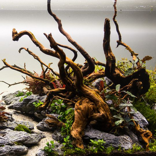 Aquarium Decoratie Hout