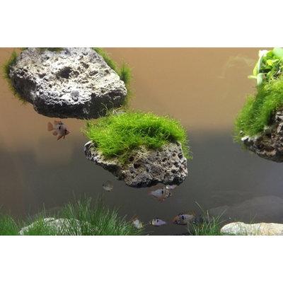 Aqua Della Moss Stone met Zuignap XS