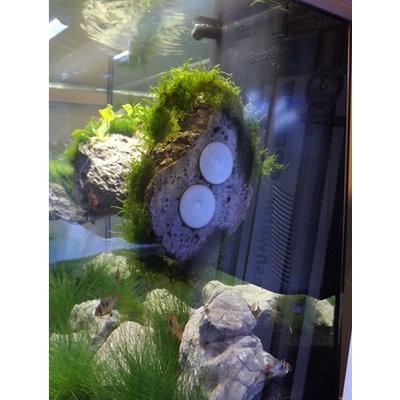 Aqua Della Floating Rock 2 met zuignap