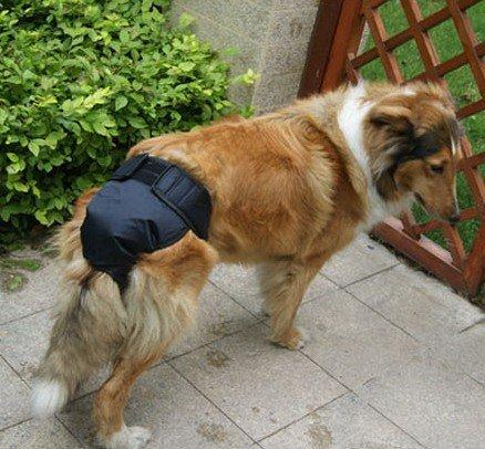 Hondenluiers  kopen