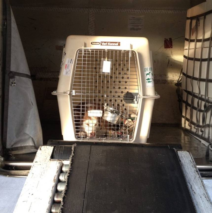 Transport Hond Vliegtuig