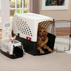 Transportbox Hond
