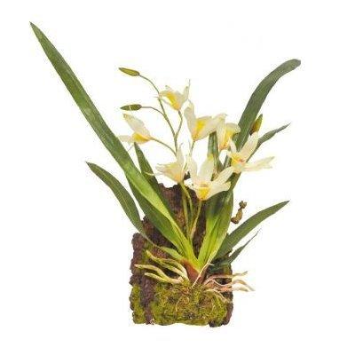 Lucky Reptile Terrarium Plant Orchidee wit